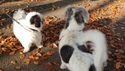 De hondenuitlaat plaats als ontmoetingsplek